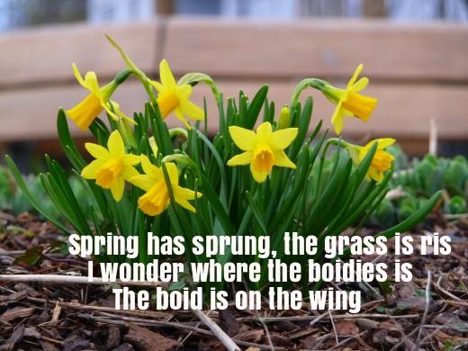 Spring Has Sprung Nursery Rhyme Lyrics