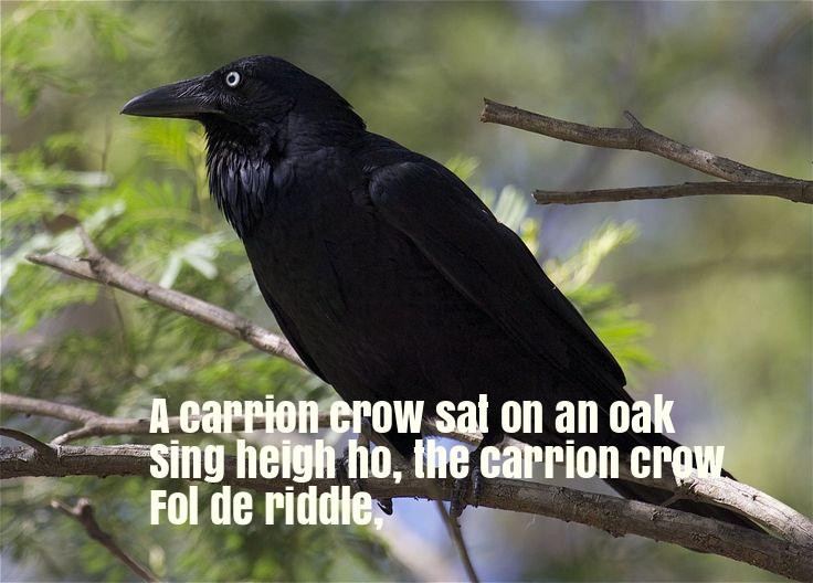 A Carrion Crow Sat On An Oak Nursery Rhyme Lyrics